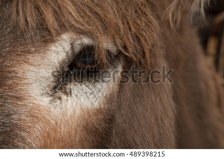 Close up of burro donkey eye