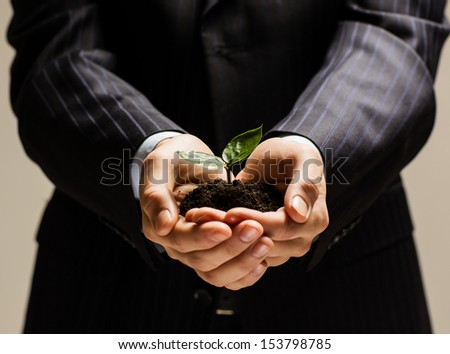 Close up of businessman hands with sprout in palms