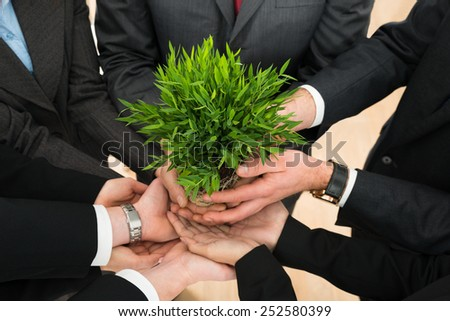 Close-up Of Businesspeople Hands Holding Plant Together - stock photo