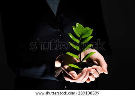 Close up of businesswoman hands holding small green sprout