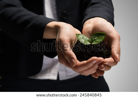 Close up of businesswoman hands holding small green sprout - stock photo