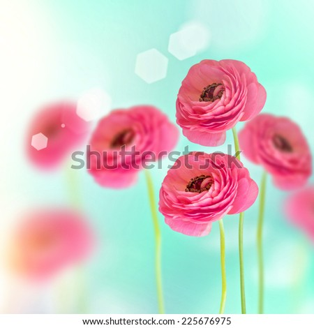 Close-up of buttercup flower - stock photo