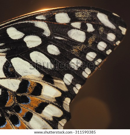 Close up of Butterfly's Wing