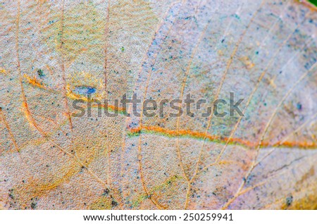 Close up of butterfly wing, Thailand - stock photo