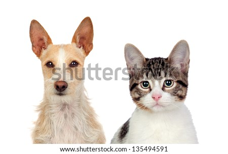 Close-up Of Cat And Dog Isolated Over White Background - stock photo