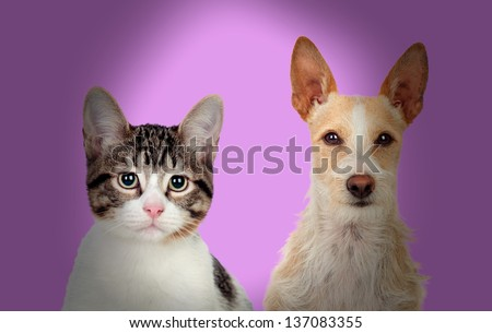 Close-up Of Cat And Dog Over Purple Background - stock photo