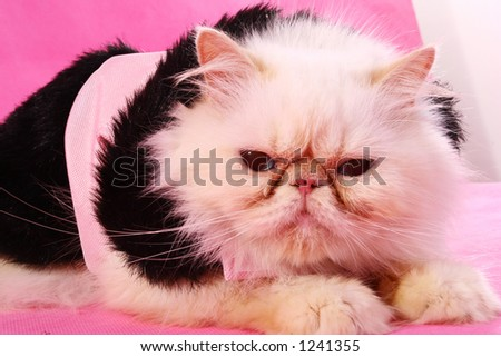 close up of cat on pink - stock photo