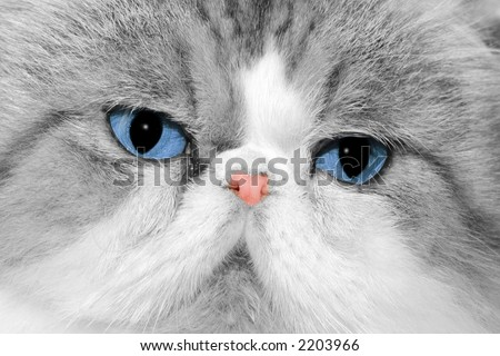 Close up of cat's face - stock photo