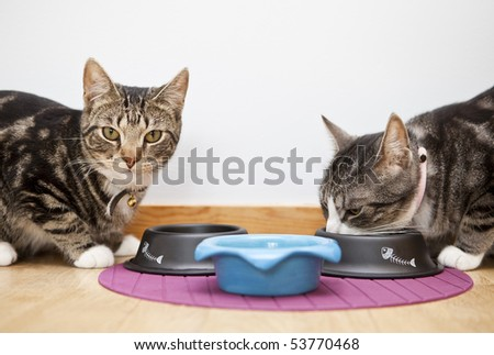 Close up of Cats eating - stock photo