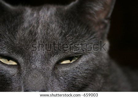 Close up of cats eyes showing suspicious behavior or suspicious of others. - stock photo