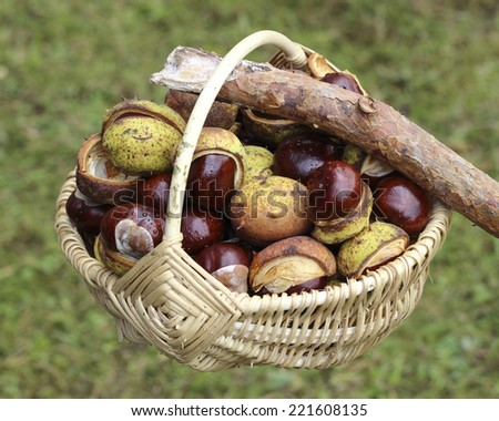 Close up of chestnut harvest in wicker basket - stock photo