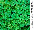 Close-up of clover carpet background 04 - stock photo