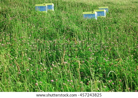 Close Up of Clover Flowers And Herbal Plants On The Alpine Meadow With Apiary In Background - stock photo
