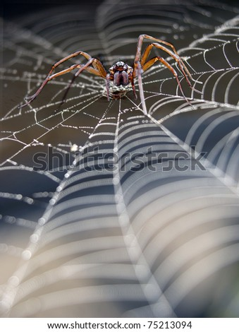 Close up of cobweb with spider - stock photo