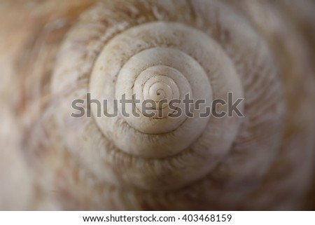Close-up of Cockleshell - stock photo