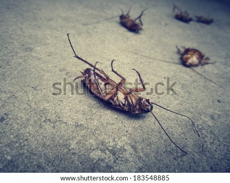 Close up of cockroach - stock photo