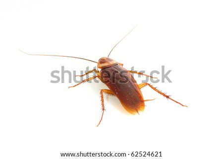 Close up of cockroach, but it was die. - stock photo