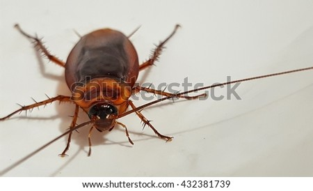 Close up of cockroach on wash basin. - stock photo