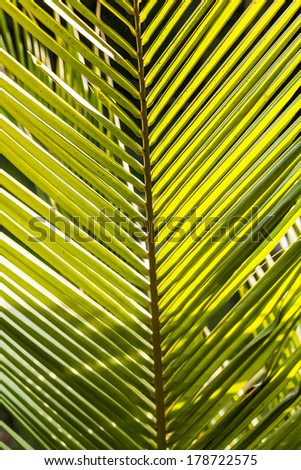 close up of coconut leaves