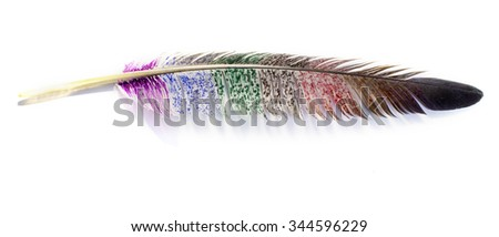 Close up of   colored feathers