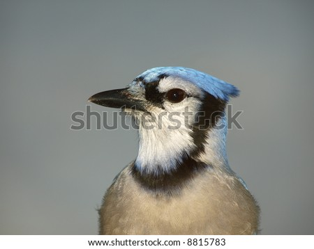 Close up of colorful bird profile on grey background - stock photo