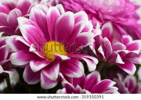 Close up of colorful flowers - stock photo