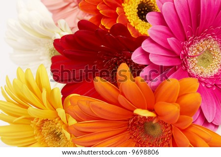 close-up of colorful gerbera flowers - stock photo