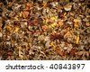 Close-up of colorful herbal tea mixture with sunflower blossoms - stock photo