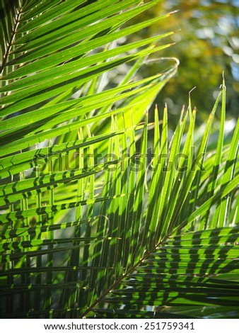 close up of colorful palm leaves on a sunny day outdoor - stock photo