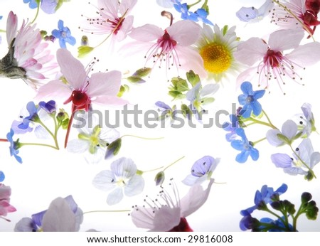 Close-up of colorful petals against white background - stock photo