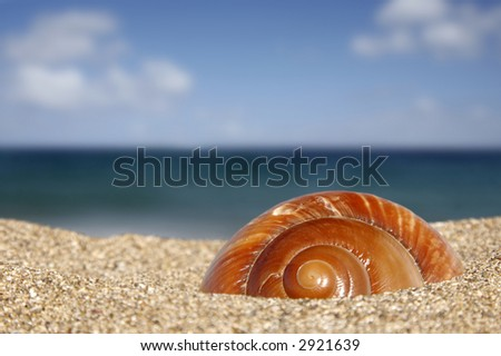 Close up of conch on sandy beach with sky background - stock photo