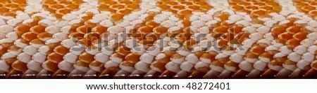 Close-up of corn snakeskin or red rat snakeskin, Pantherophis guttattus - stock photo