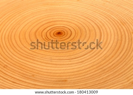 Close up of cut tree showing rings