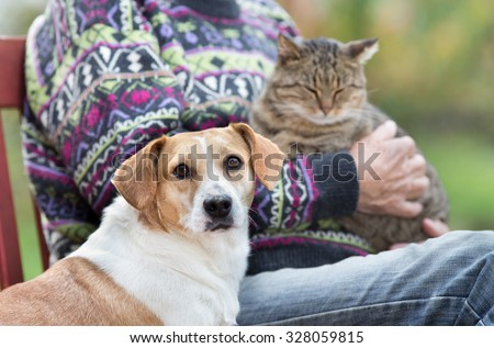 Close up of cute dog standing on bench next to his owner who holding cat in the lap - stock photo