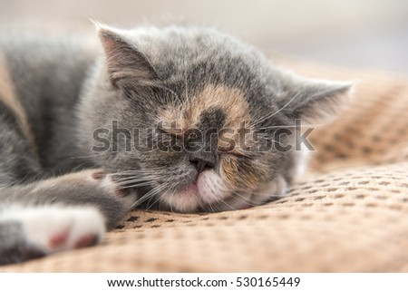 Close up of cute  kitten sleeping on a cushion, shallow focus