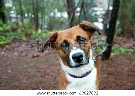 Close Up of Cute Mix Breed Dog Enjoying Walk in Park - stock photo