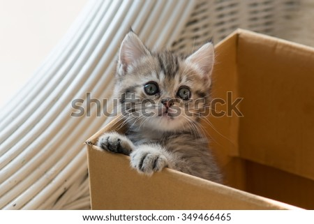 Close up of cute tabby kitten holding paper box in the moring - stock photo