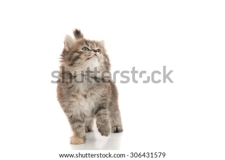 Close up of cute tabby kitten looking up on white background isolated - stock photo