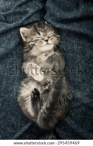 Close up of cute tabby  kitten sleeping on blue jeans background - stock photo