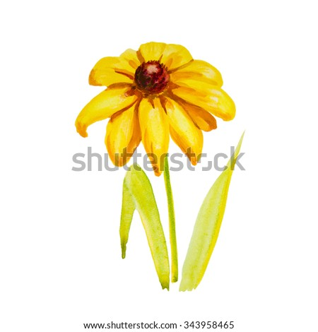close up of  daisy flower on white background  with - stock photo