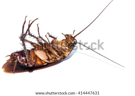 Close up of Dead cockroache overturn on isolate white background Cockroaches as carriers of disease
