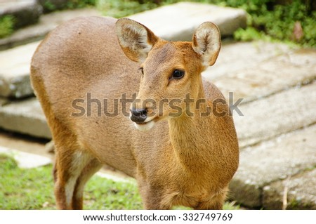 Close up of deer with shallow depth of field (DOF) - stock photo