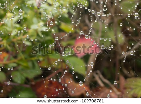 Close-up of dew drops on a spider web - stock photo