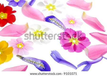 Close-up of different flower petals against white background - stock photo