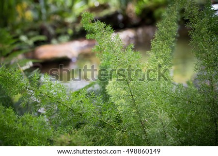 close up of dill branch