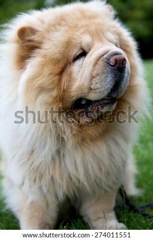 Close-up of dog - stock photo
