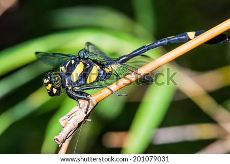 Close up of dragonfly, Thailand