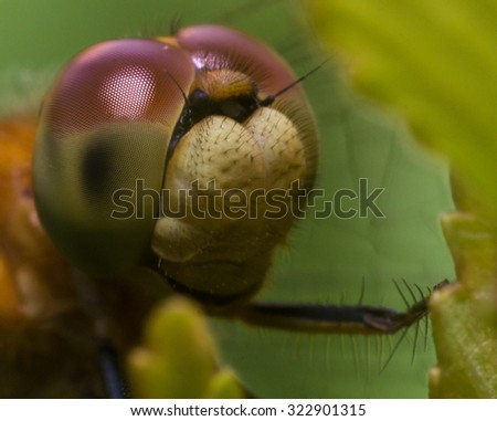 Close up of dragonfly with big red and green eyes