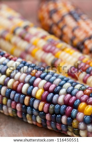 Close up of dried Indian Corn on wooden surface  as decoration for Thanksgiving Table, Halloween, and the Fall Season