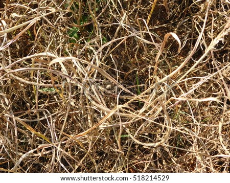 Close Up of Dry Grass Intertwined in Harvested Field